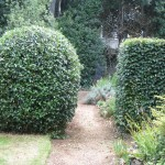 shaping shrubs and trees 1