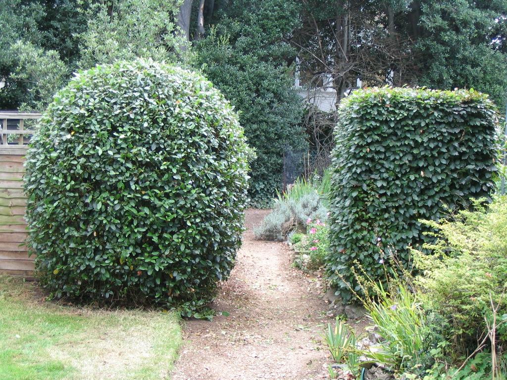 Cheap lawn maintenance for Cheap garden maintenance