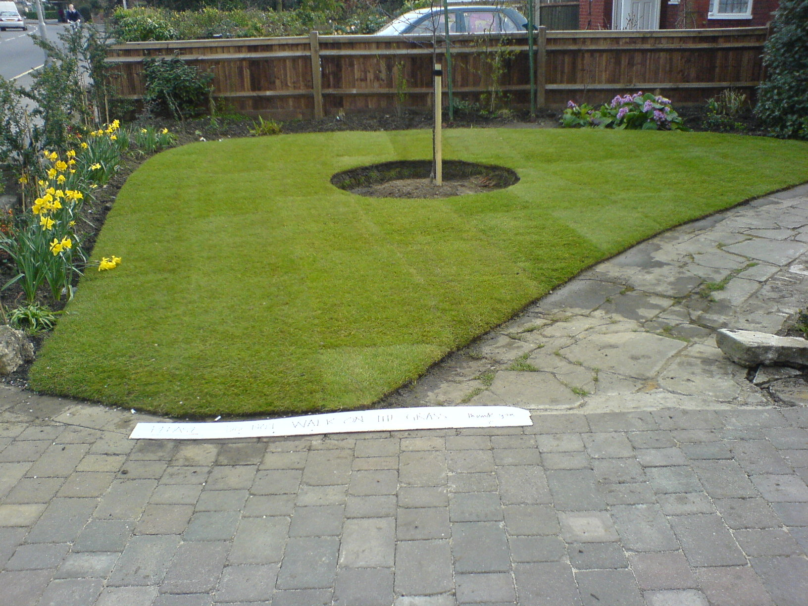 lawn after turfing 2